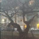 umbrella in tree