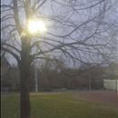 balloon in tree