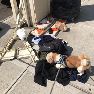 Trash near 641 East Tremont Avenue, New York
